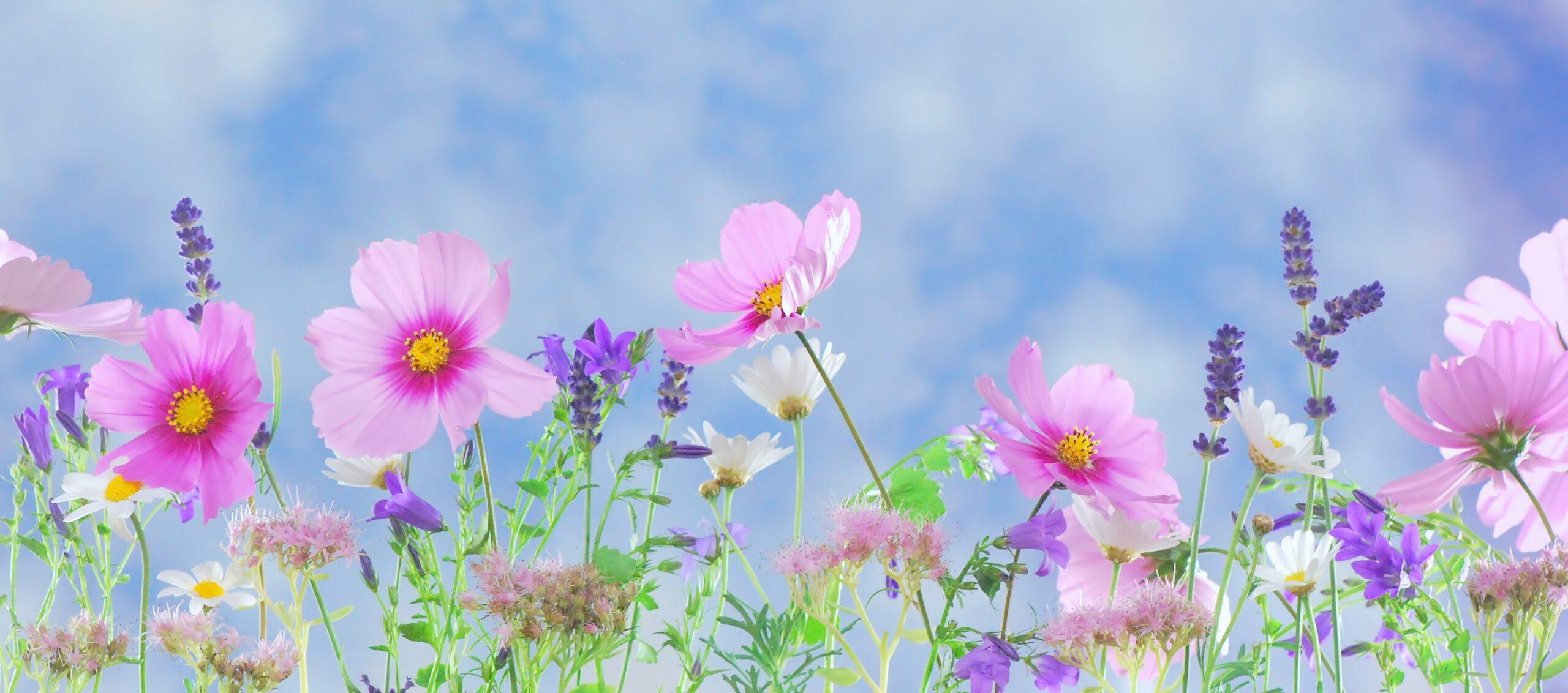 wild flowers flowers plant macro 40797